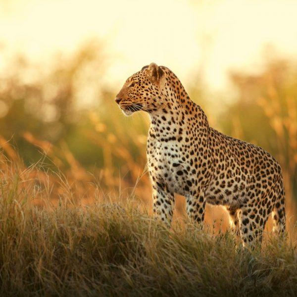 Viaje Botswana