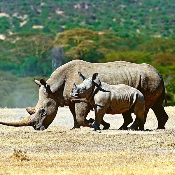 Safari Kenya Valle del Rift