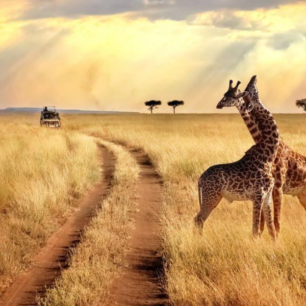 Tanzania-Zanzibar-Agosto
