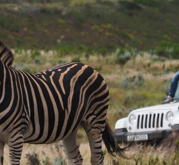 Resultado de imagen de kike calleja gondwana
