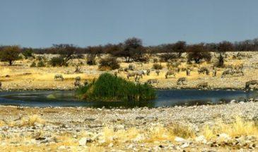 Etosha-National-Park Namibia